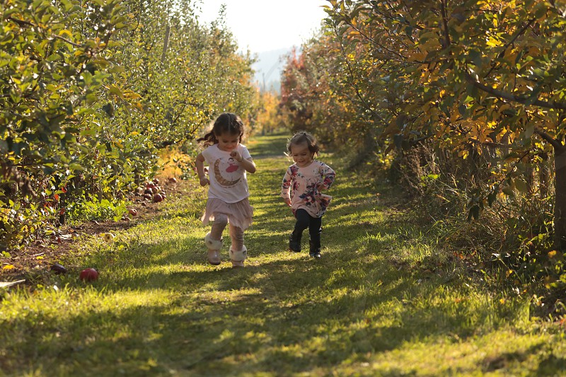 Toddler girls running in apple orchard. photo