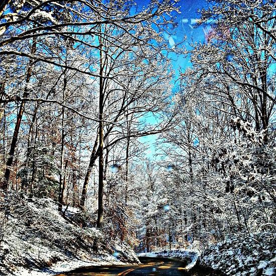 a winter wonderland photo