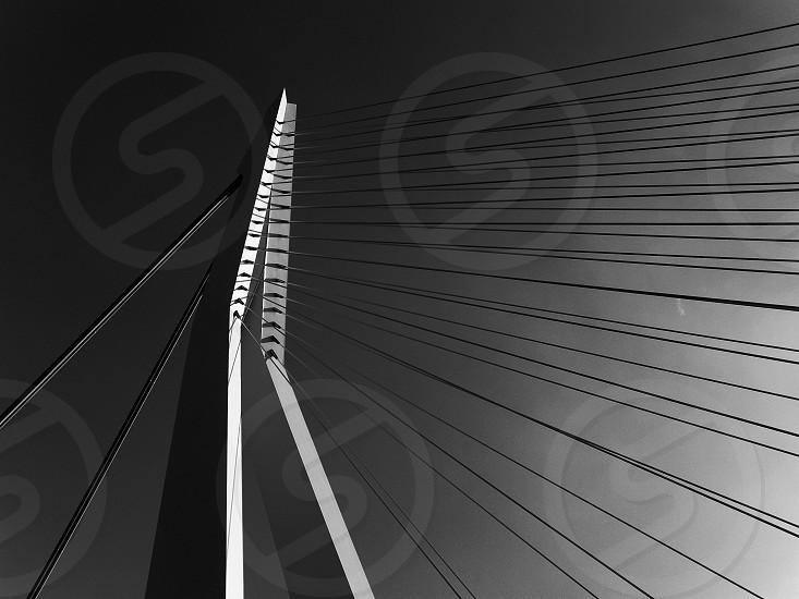 Erasmus Bridge 'the Swan' Rotterdam Netherlands photo