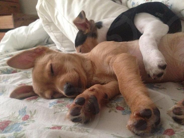 Cuddle Bugs photo