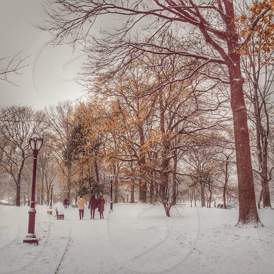 Let is snow. Central Park NYC. photo