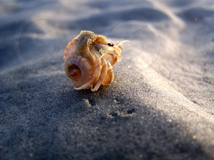Hermit Crab closeup photo