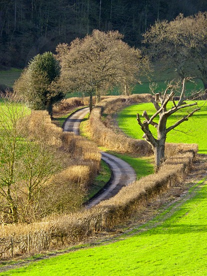 Winding Country Lane near Nettlebed in the Oxfordshire countryside on a sunny January afternoon. photo