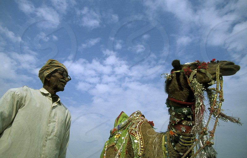 Kamel Farmer at the kamel Festival in the town of Bikaner in the province Rajasthan in India. photo