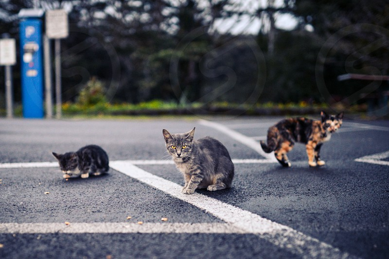 cats strays stray cat stray cats kittens kitten animals photo