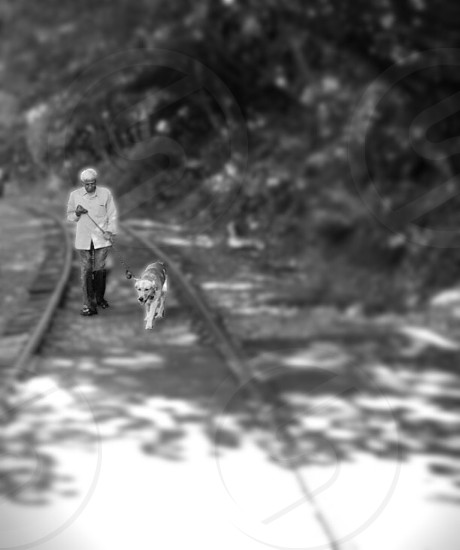 grayscale photo of man holding the leash of dog while walking near tall trees photo