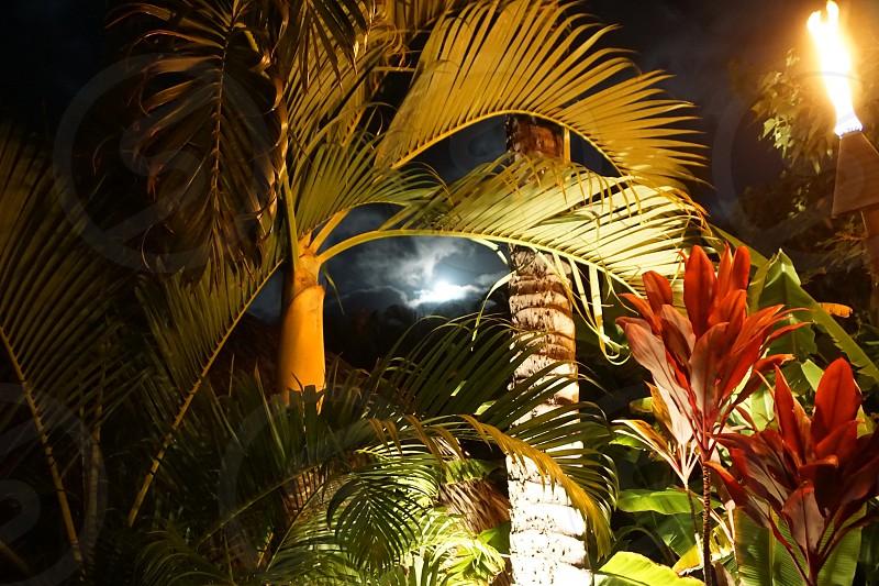 Moon Maui photo