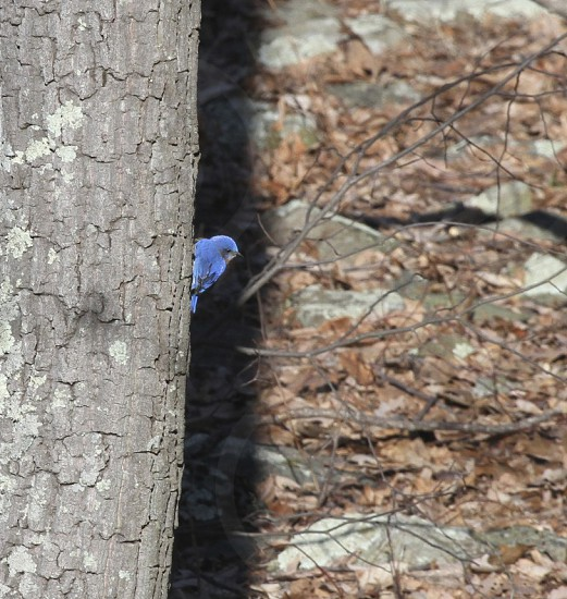Perched between a tree and its shadow is a little friend.  Winter 2014 VA. photo