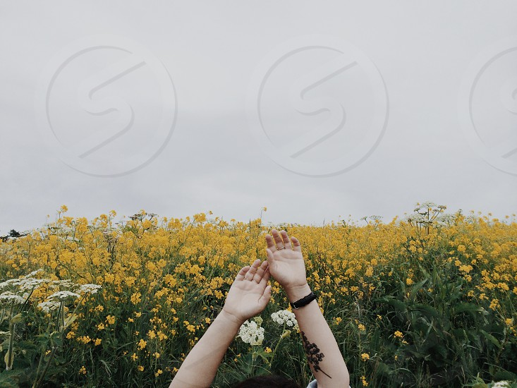 raised hands on yellow flowers field photo