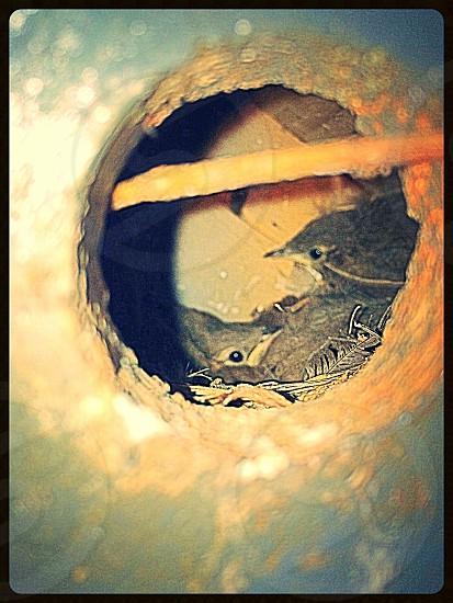 Sneak peek in the Bird House ... photo