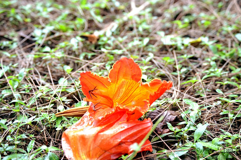 flower orange earth landscape photo