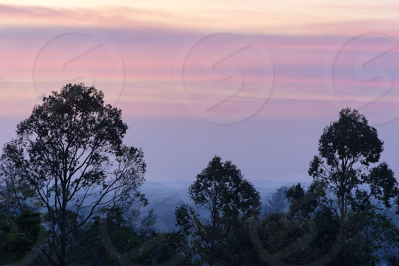 Colorful beautiful magenta clouds on sky before the sunrise in the hazy early morning time. Trees silhouettes on foreground photo