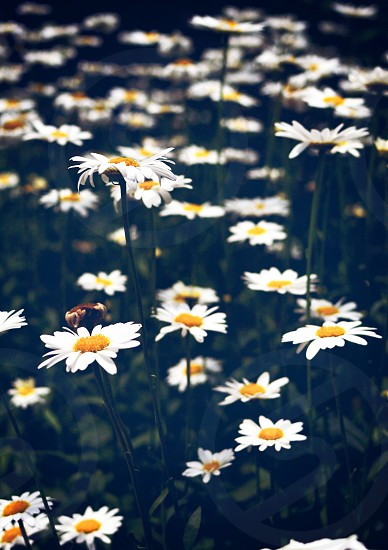 white repetitive flowers photo
