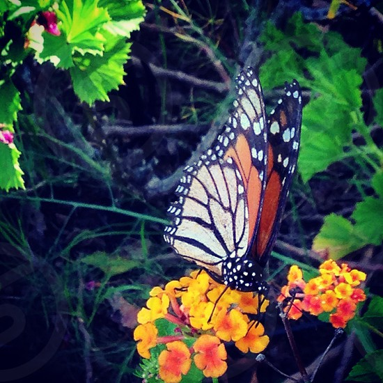Beautiful butterfly bright intense colour photo