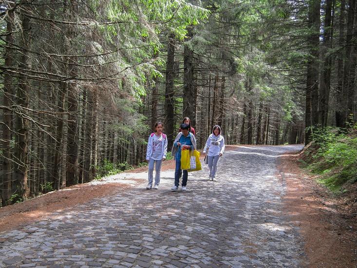 Walk through the woods - Paltinis resort area Sibiu county Romania 1400m 19-07-2008 photo
