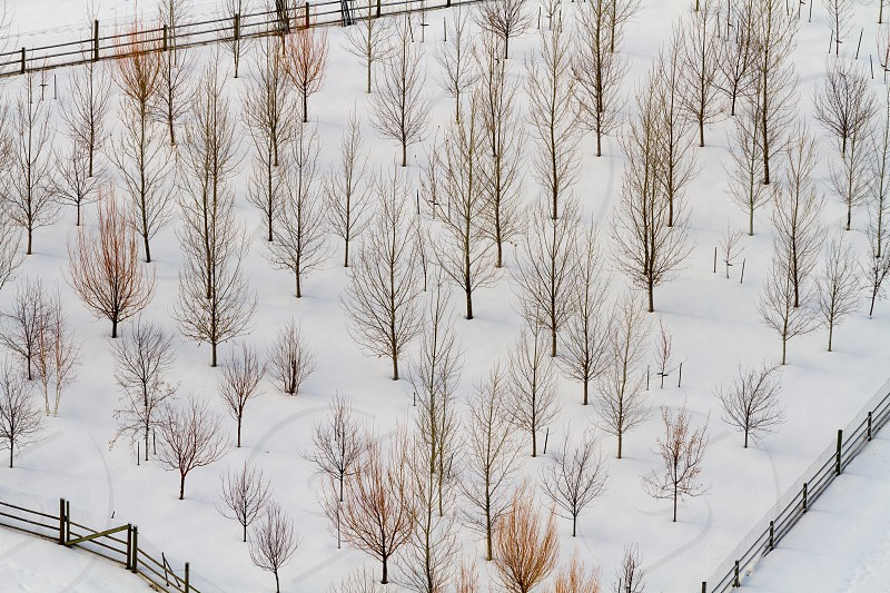 An aerial or drone view of deciduous trees in winter photo