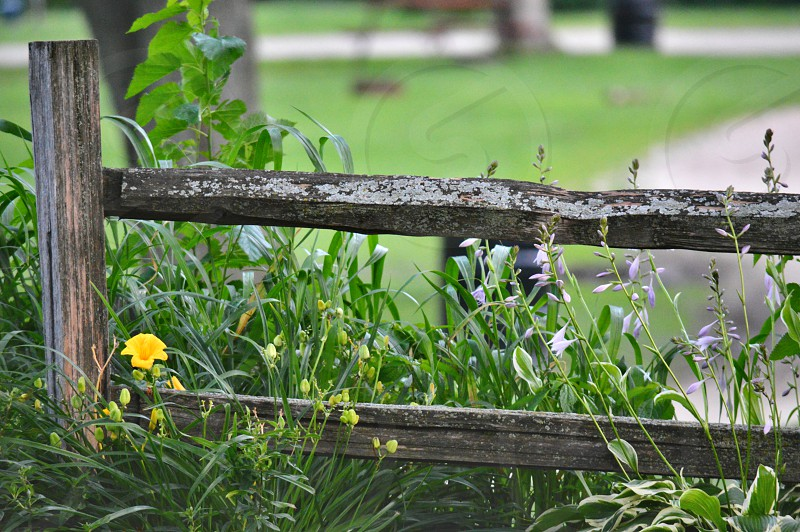 yellow flower near brown wooden fence photo