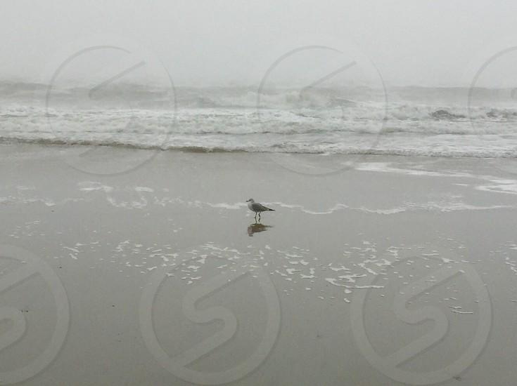 gray bird on beach sand photo