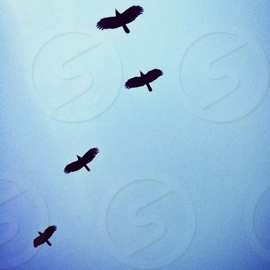 birds silhouette  photo