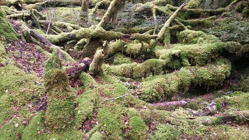 Rainforest floor New Zealand photo