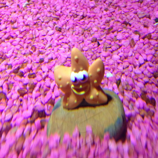 Star fish with pink gravel.  photo