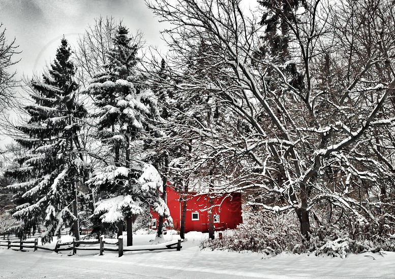 red house between pine trees photo