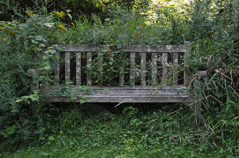 Bench in the Woods photo