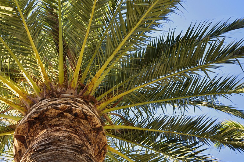worms eye view of palm tree under clear blue sky during daytime photo