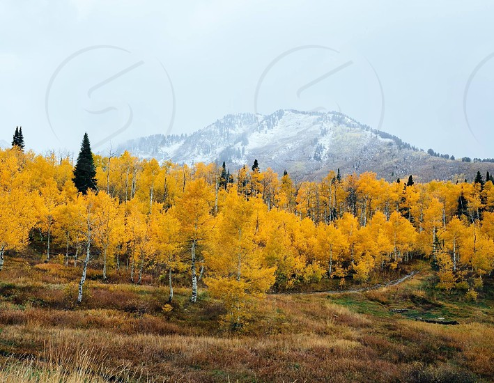 yellow and brown trees on cliff hill photo