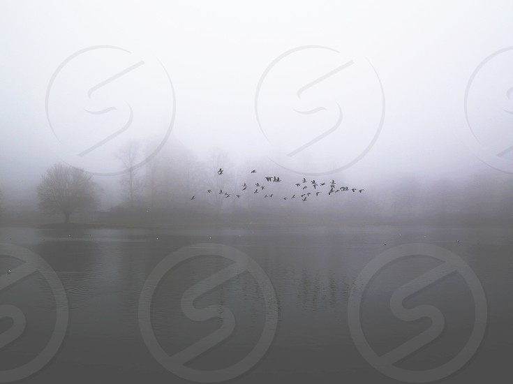 Reflective inspiring meditational nature flying birds fog foggy seasons  photo