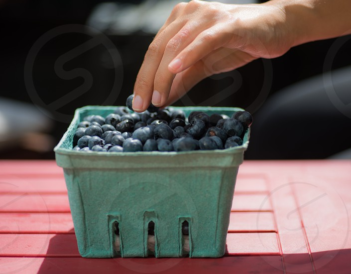 person picking blueberries in teal square box photo