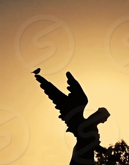 Silhouetted against the morning sky a small bird perches on the stone wings of an angel statue photo