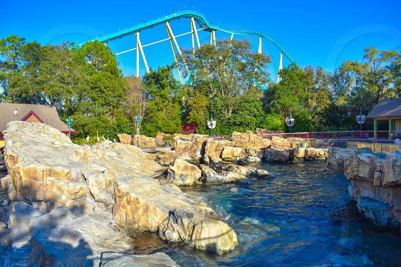 Orlando Florida . February 26  2019.  Panoramic view of Sea Lions on the rocks at Seaworld Theme Park (1) photo