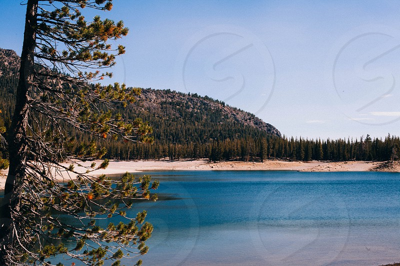 green pine trees by the brown sandy lakeshore under clear blue sky photo