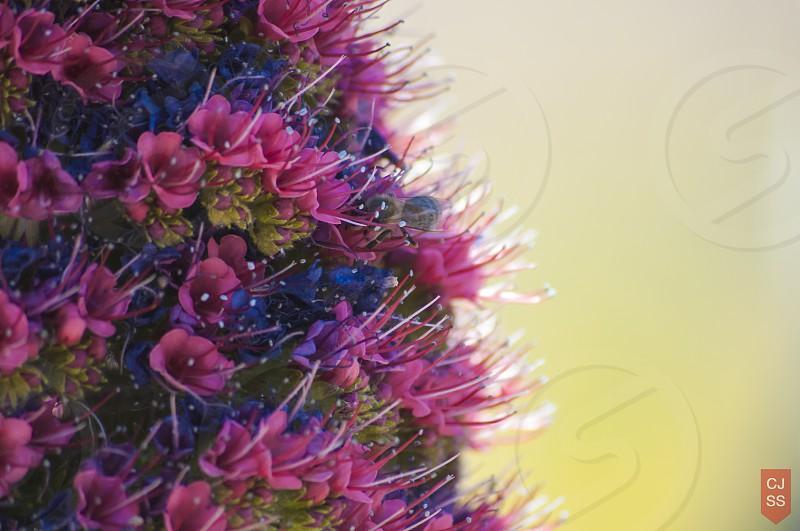 Bee & Flowers photo