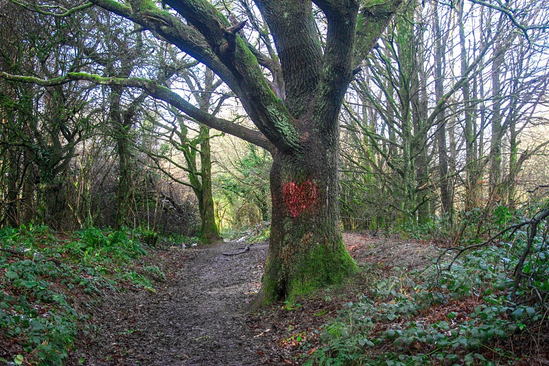 Quantock Hills Somerset.  photo