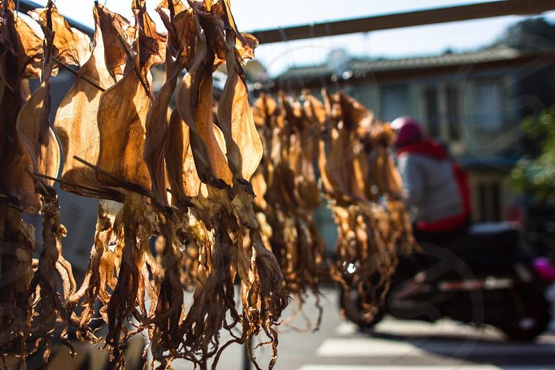 Seafood Taiwan  photo