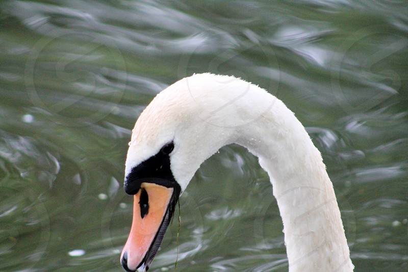 The hard beak against the soft fur of the body photo