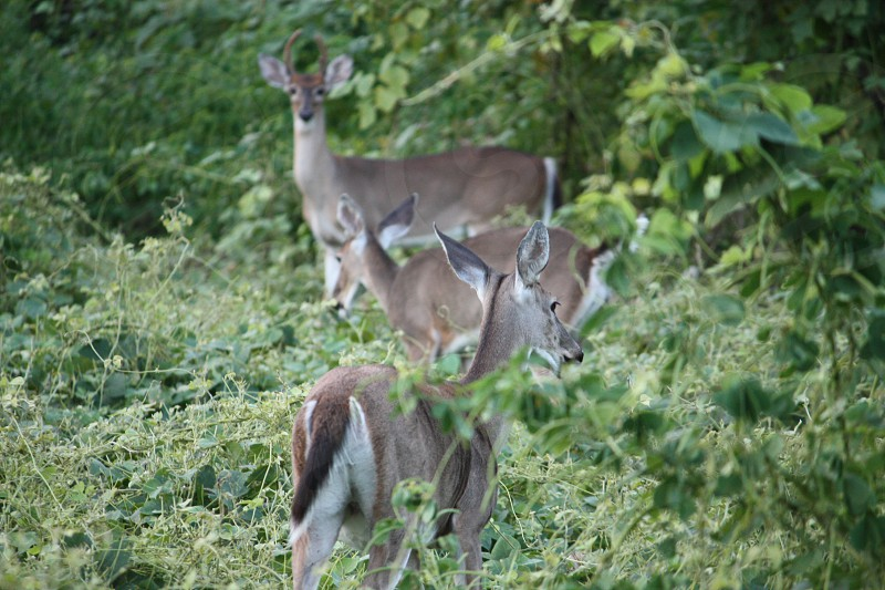 brown deer on green leafed plants photo
