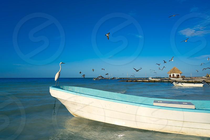 Holbox Island heron bird and boat in the beach Quintana Roo of Mexico photo