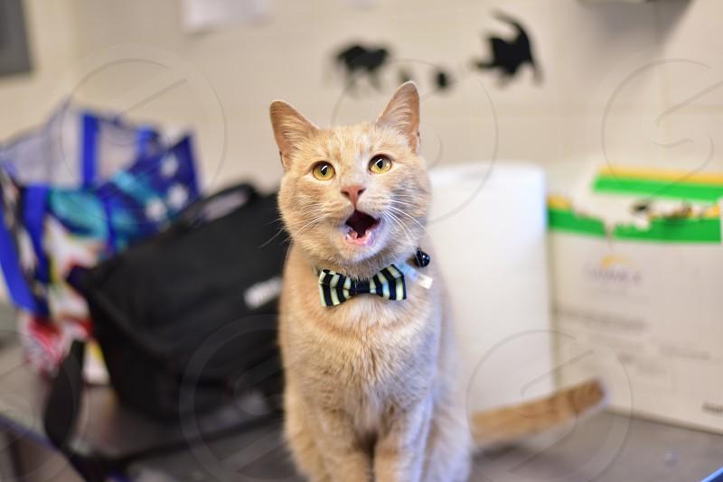 Happy Felines photo