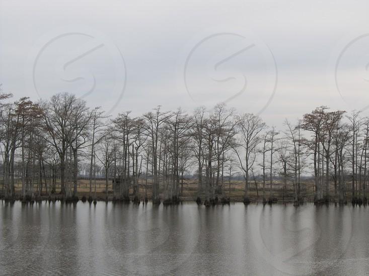 Winter trees on bayou photo