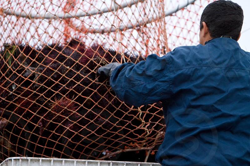 man holding orange fish net with sea urchin photo