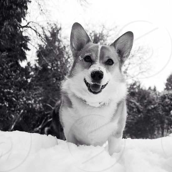 white and grey dog on snow photo
