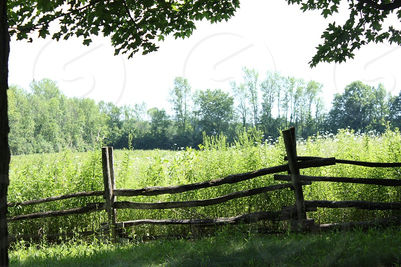 summer green field woodland wooden fence New York New England forest grassland trees green tiny flowers some shadows photo