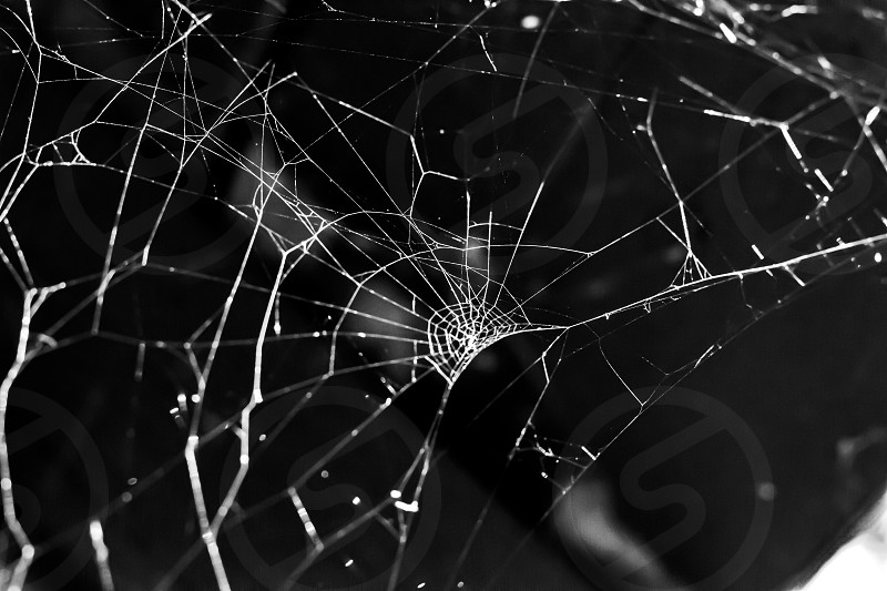 A spider web's lines are seen against darkness. The web stands but damage has made it deviate significantly from the usual pattern. photo