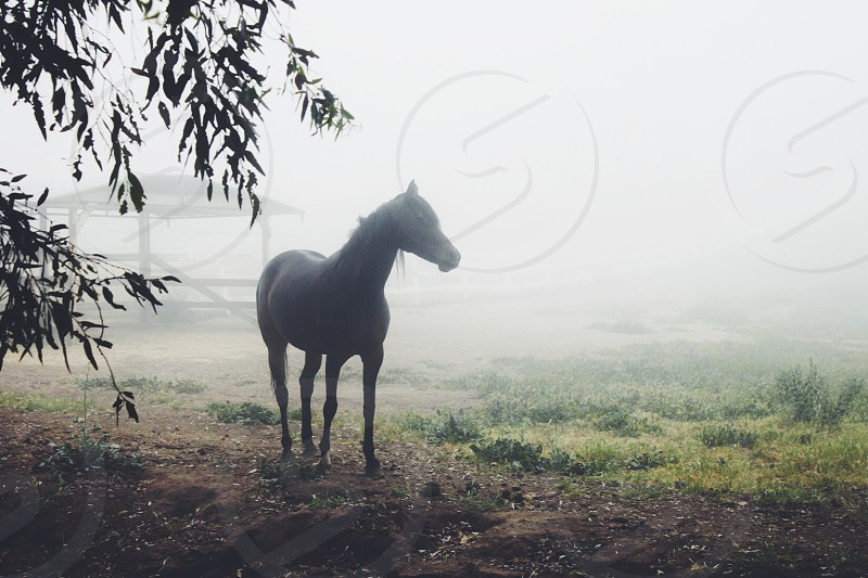 black horse with mist view photo