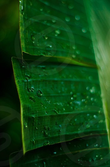 raindrops on green plant leaves photo